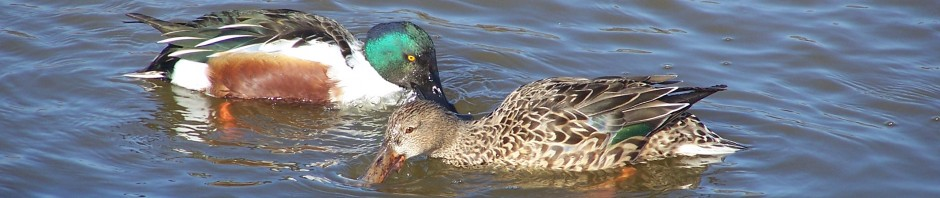 Me voy a ver patos, blog de una bióloga pratense