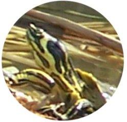 Detalle de la cabeza y el cuello mostrando las manchas amarillas.