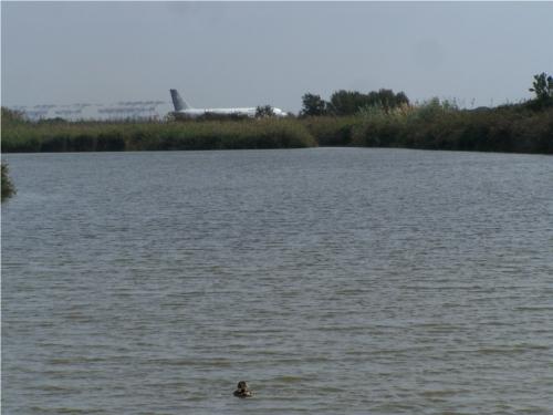 pato, avión y grúa