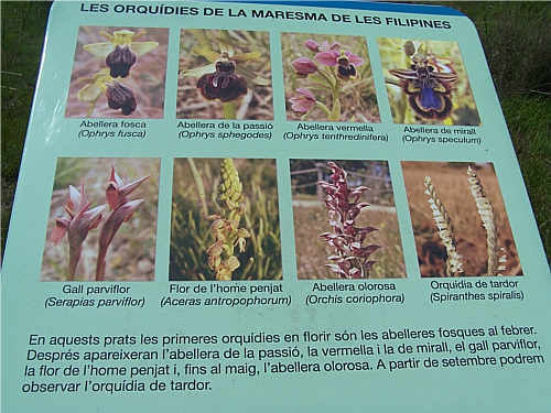 Cartel del Prado de Orquídeas