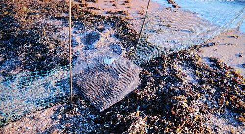 Disposición de las redes para atrapar waders