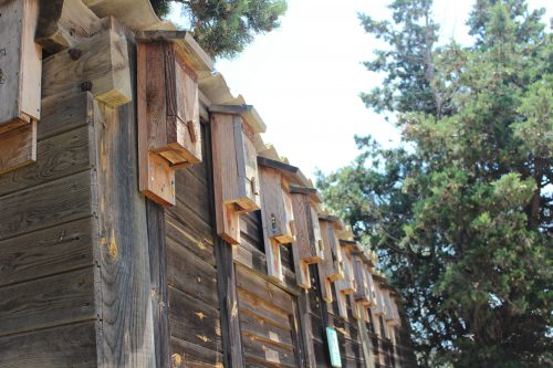 Cajas para murciélago en la Reserva Remolar Filipines