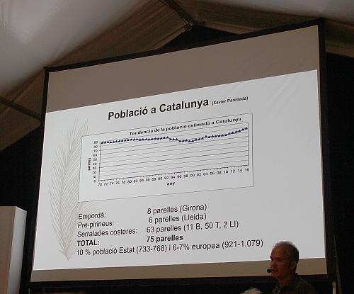 En Cataluña hay un total de 75 parejas de águilas perdiceras y parece que en los últimos años el número de parejas está subiendo muy poco a poco.