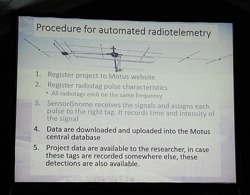 Procedimiento para poder tener una radiotelemetría automática con el sistema Motus.