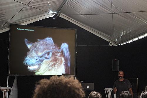 Xavier Porres en acció amb un dels convidats de la xerrada: el ratpenat dels graners.