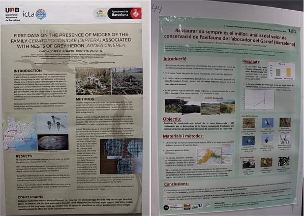 Estudi de la presència de les mosques hematòfogues en nius dels bernats pescaires (un punt de control era en el Delta del Llobregat) i l'estudi sobre si restaurar o no l´abocador del Garraf per conservar avifauna .