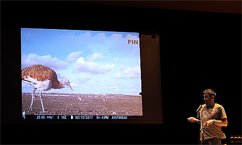 Esteban San Roman finishing his talk with this amazing Great bustard. If you click here, you'll enjoy his work with photo tramps.