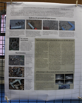POSTER 3. Roberto Saez showed us how thanks to the tracking of footprints, droppings and tramp photo