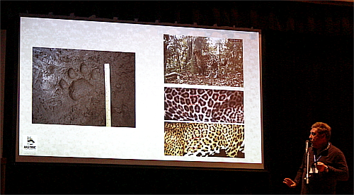 "Fernando shows a ""little footprint"" of a jaguar and shows some fur details of two individuals captured by photo tramp."